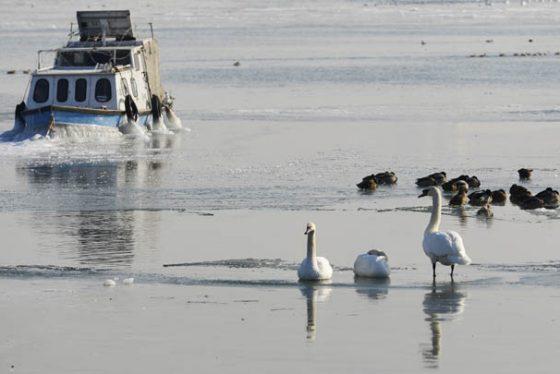 Beograd, 08. januara 2017 - Camac okovan ledom na Dunavu u Zemunu pri temperaturi od -11 stepeni. FOTO TANJUG/ TANJA VALIC/ dr