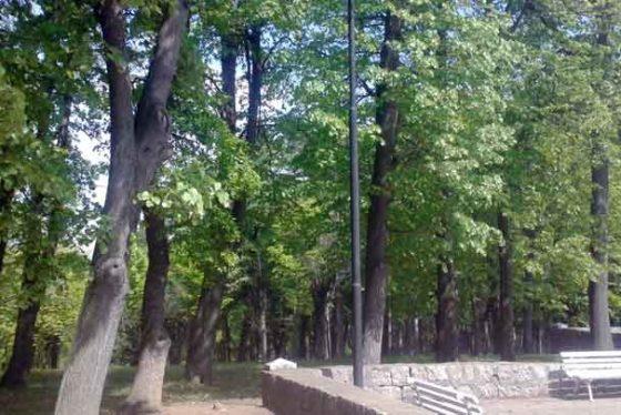 suma-park-priroda-izlet-stbvesna