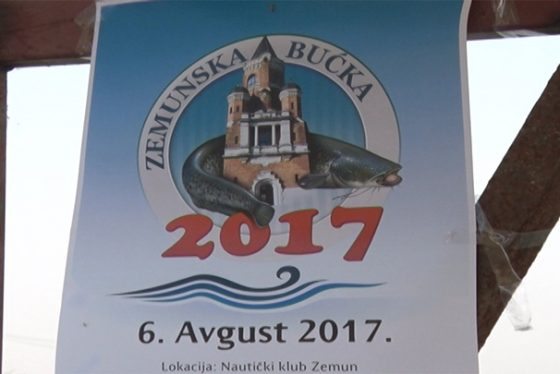 Zemun - pokrivanje - Zemunska bucka 2017