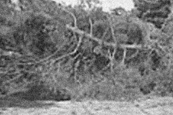 drvopalo