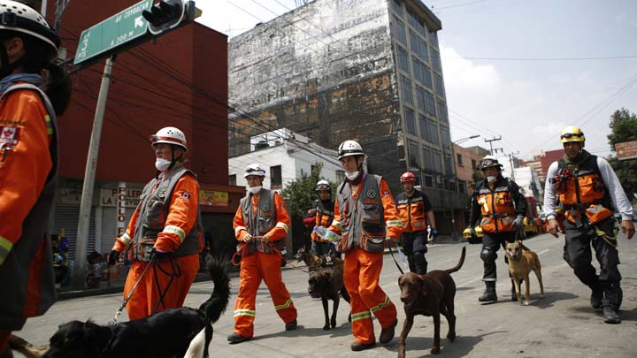 A team of Canadians leading search dogs arrives to the area around Gabriel Mancera and Escocia streets, where multiple buildings collapsed, in the Del Valle neighborhood of Mexico City, Monday, Sept. 25, 2017. Search teams were still digging through dangerous piles of rubble Monday, hoping against the odds to find survivors after the Sept. 19 quake.(AP Photo/Rebecca Blackwell)