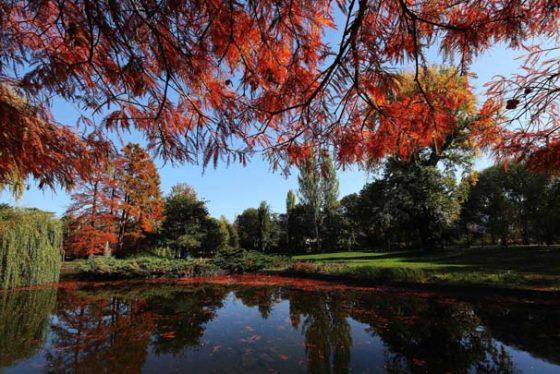 Novi Sad, 2. novembra 2017. - Jesenje jutro u Dunavskom parku u Novom Sadu. FOTO TANJUG/ JAROSLAV PAP/ bk