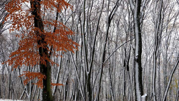 Fruska Gora, 27. novembra 2017 - Sneg na Fruskoj Gori. FOTO TANJUG / JAROSLAV PAP / bb