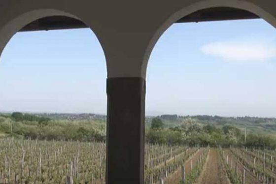 vinograd-greb